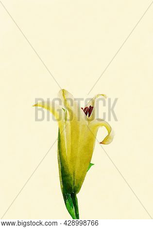 Hand painted water color art illustration. Beautiful classic watercolor painting of a blooming flower.
