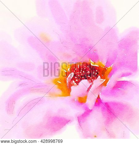Hand painted water color art illustration. Beautiful classic watercolor painting of a close up of pink flower. Wall art for prints and canvass.