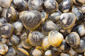 Fresh seafood - shells of shellfish for texture - poster