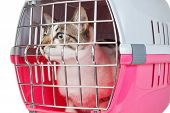 Pet cat trapped in a cage for a veterinarian. poster
