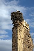 Stork Nest on top of a wall Marrakech Morocco poster