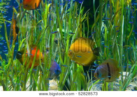 planted tropical  aquarium with fishes