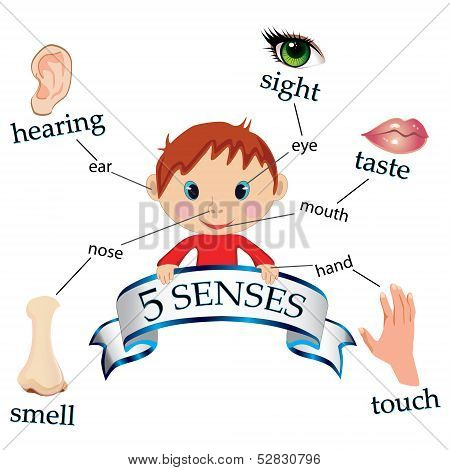 vector illustrating an educational concept  of the five senses poster