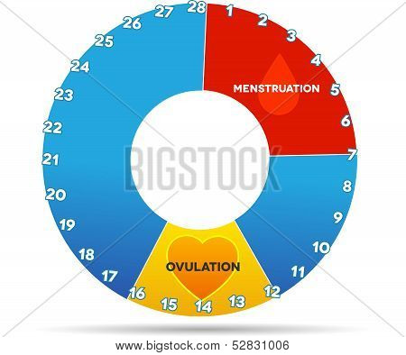 Menstrual graphic