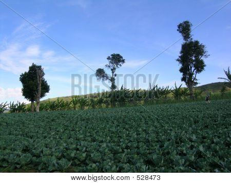 Peachay Vegetables