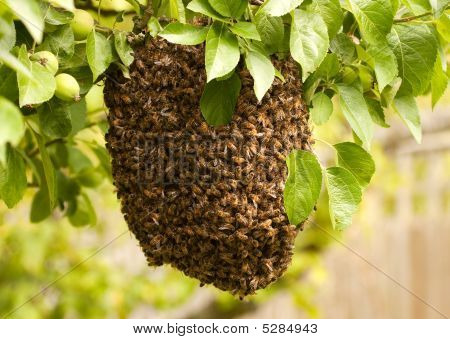 Swarm Of Uninvited Bees