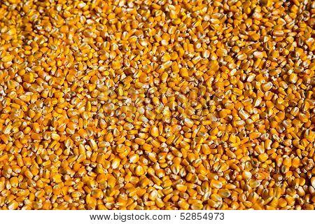 Kernels Of Corn