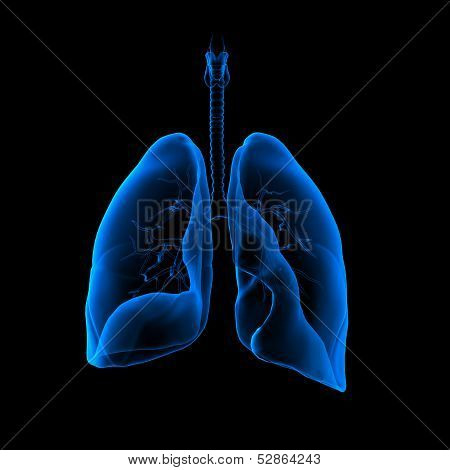 3D medical illustration - lungs front view