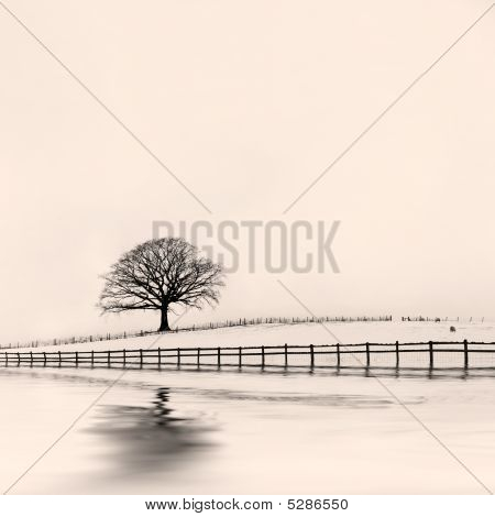 Winter Oak Tree In Snow