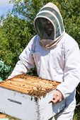 Young male beekeeper in protective workwear carrying honeycomb frames in crate at apiary poster