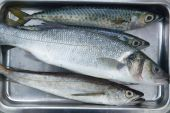 Sea bass hake fish and mackerel fishes on stainless steel tray poster