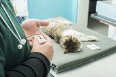 Veterinary Blood test. Cat in vetrinary. Animal clinic poster