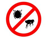 Prohibition sign for fleas and ticks on white background poster