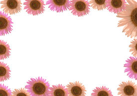 Sunflower Frame Border