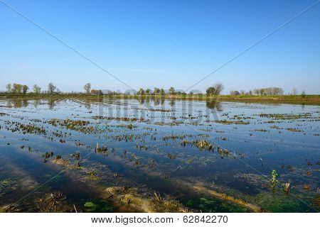 Flooded rice field  near Garlasco, Lomellina (Italy) poster