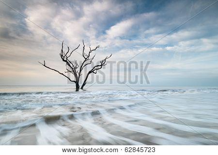 Lone Tree Atlantic Ocean Coastline Edisto Island Lowcountry South Carolina