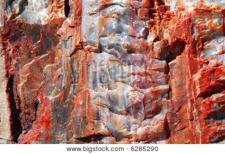 Piece Of A Petrified Log