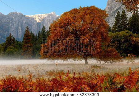 Beautiful Mist in early morning , yosemite valley