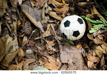 Mini Football On Dried Leaves