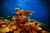 Majestic marine life, beautiful natural background, coral garden and many exotic fishes under transparent water, beauty of nature concept poster