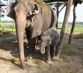 Baby elephant and mom standing next to each other poster