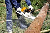 Lumberjack logger worker in protective gear cutting firewood timber tree in forest with chainsaw poster