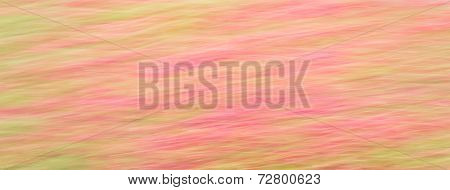 Abstract Flower Field