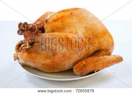 Roasted Turkey On White