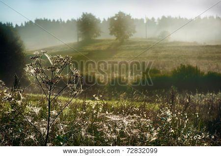 Spider web in misty morning