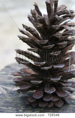 pinecone02