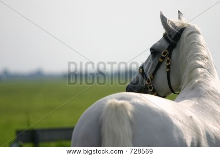 Horse Looking Away