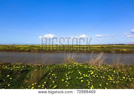 Yellow Flowers In Cadiz Marshes
