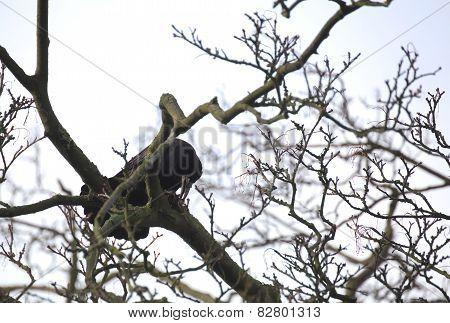 Rook On Tree