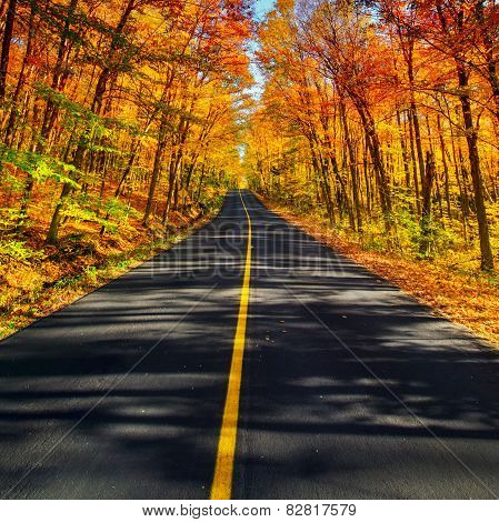 The Long Rural Autumn Road Corridor