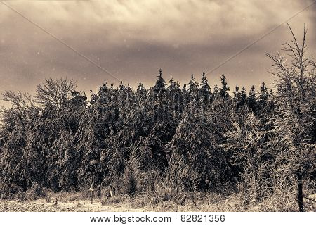 Snowing On Ice Covered Forest Landscape