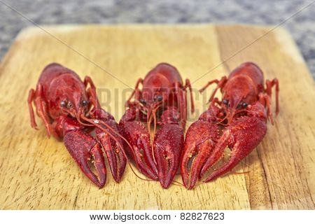 Three Red river crayfish on cutting board in front perspective poster