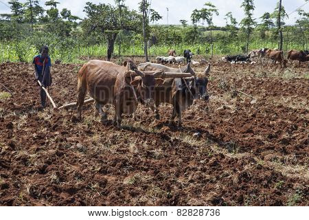 Boy Plowing The Earth