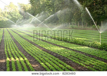 Watering of a nursery plantation