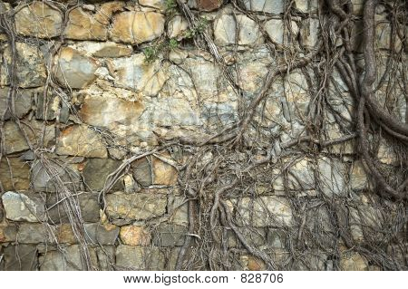 ancient wall with roots poster
