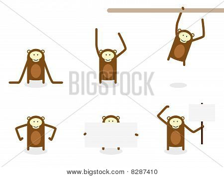 A Collection Of Monkeys and Chimps