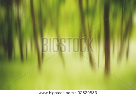 Abstract Motion Blur Of Trees In A Green Forest In Spring Time,