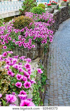 Beautiful Surfina Petunias In Flower Beds On A Street
