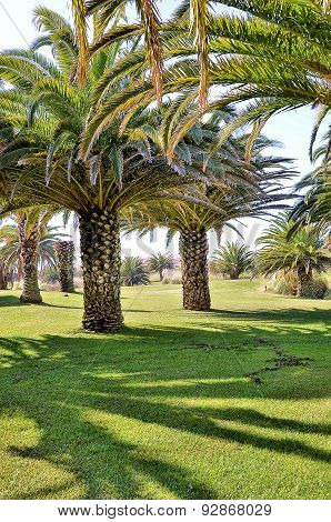 Park with palm trees