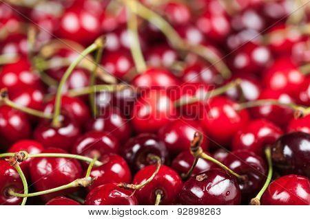 Background Of Juicy Cherry