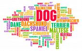 All Types of Dogs and Every Breed as Concept poster