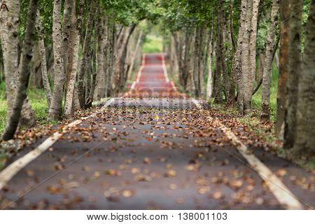 a beautiful picture with a road. what man builds is always amazing. a picture special and beautiful. impeccable resolution