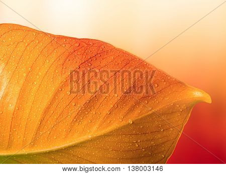 red autumn leaf with water drops
