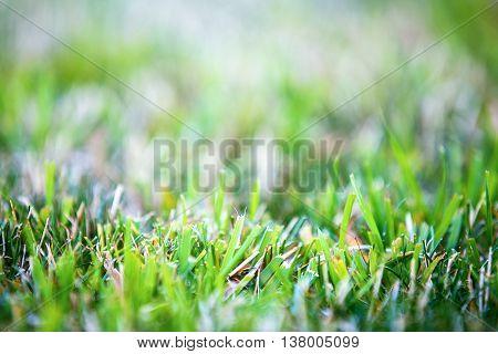 Mown Grass Background