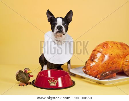A Dogs Thanksgiving
