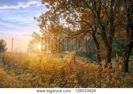 Early morning forest landscape at sunsrise with fog in autumn